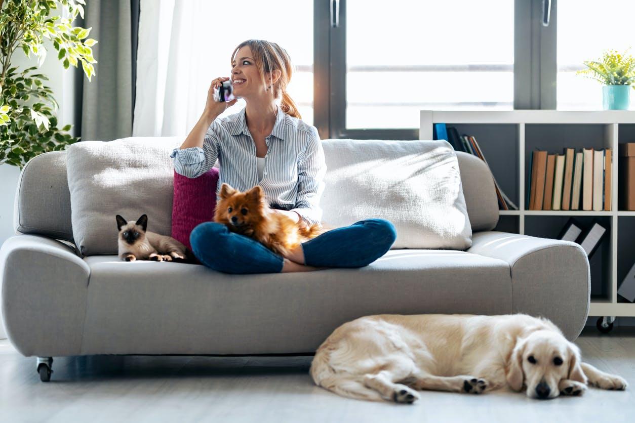 Animais de estimação em casas arrendadas: o que diz a lei